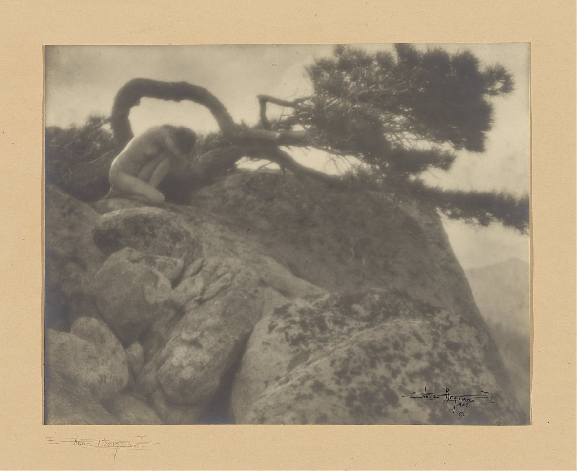 The Lone Pine door Anne W. Brigman